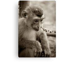 waiting monkey Canvas Print