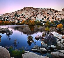 Joshua Tree National Park Series - Barker Dam Pond at Dusk by Philip James Filia