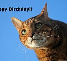 Happy birthday by cindylu