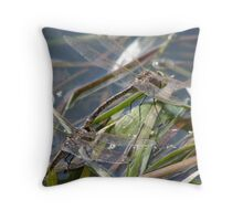laying eggs Throw Pillow
