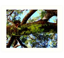 TREE MOSS ADDING TO THE COLOUR Art Print