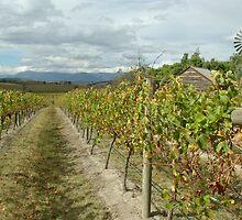 Yarra Valley by retsilla
