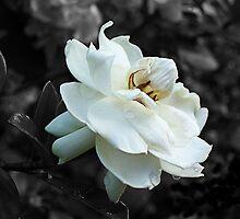 Gardenia by Marian Moore