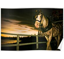 Trotting Poster