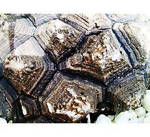 Unusual Bark Photographic Print