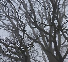 Oak Tree Branches in Fog by pluspixels