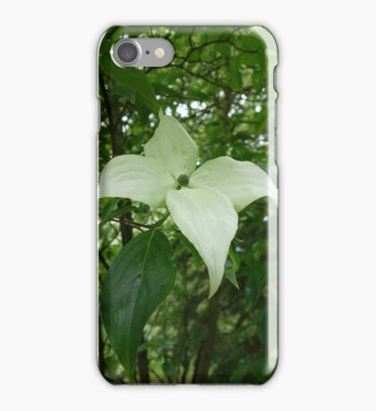 Cornus Nuttallii Flower iPhone Case/Skin