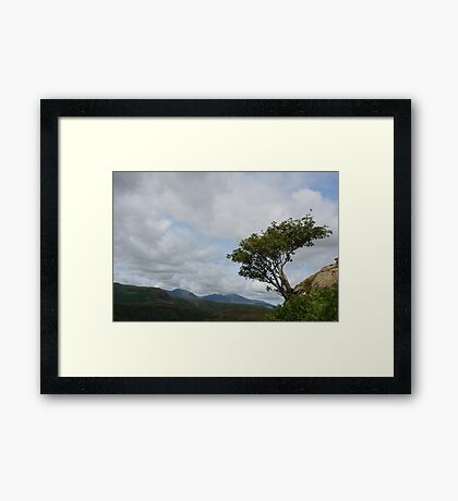 Windswept Rowan Tree Framed Print