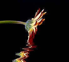 Elixir of Life by Sue Martin
