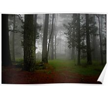 Pine Forest Mists Poster