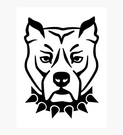 Pit bull head face Photographic Print