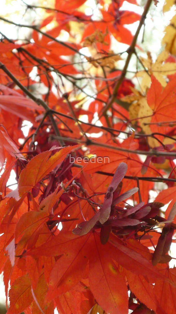 Australian Autumn - 4 by beeden
