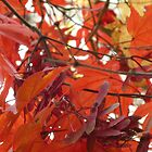 Australian Autumn - 4 by beeden