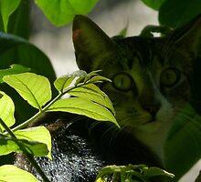 cat VI - gato by Bernhard Matejka