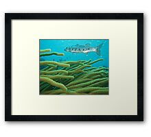 Barracuda Framed Print