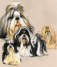Shih Tzu by BarbBarcikKeith