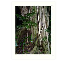 Rainforest Tree Art Print