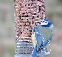 Feeding time for Blue Tit............ by lynn carter