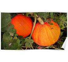 Pumpkin for Fall, Halloween Poster