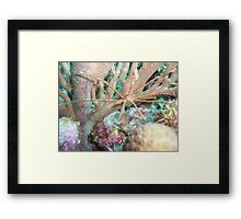 Arrow crab Framed Print
