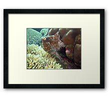 caribbean octopus Framed Print
