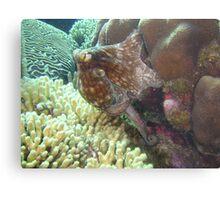 caribbean octopus Metal Print