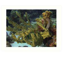 Soft corals Art Print