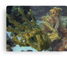 Soft corals Metal Print