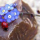 ladybug paradise ... by SNAPPYDAVE