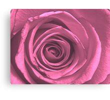 Hot Pink Rose Canvas Print