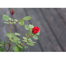 Touch of Red Photographic Print