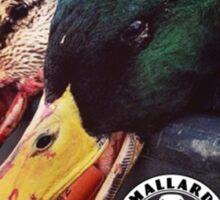 Heavy Shot Mallards - Mallard Down Sticker
