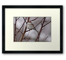 Sparrow in a Spring Snowstorm Framed Print