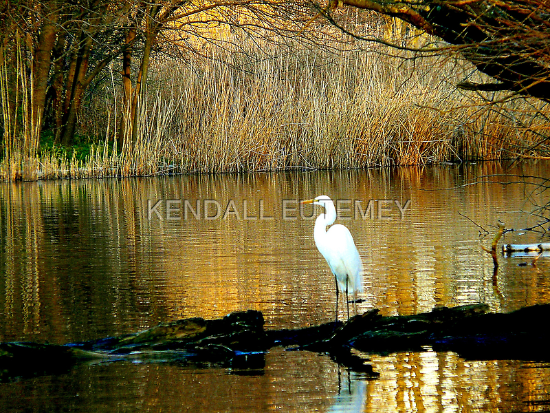 STANDING ON SHAKEY GROUND by KENDALL EUTEMEY