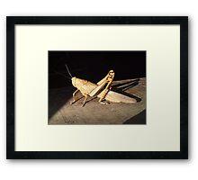 *bows* Grasshopper Framed Print