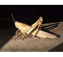 *bows* Grasshopper Photographic Print