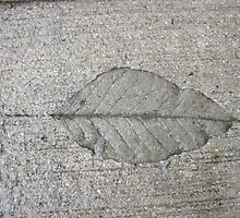 Sidewalk Art by Leaf by Thomas Murphy