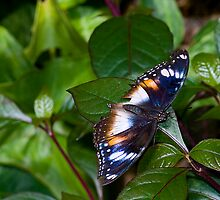 Butterfly House by Fotoman6