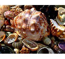 Beach Jewels.... Photographic Print