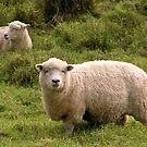 Ewe Two by Andrew S