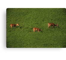 Deer in Bean Field Canvas Print