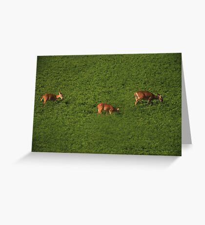Deer in Bean Field Greeting Card