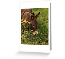 Hot Wheezing Donkey Greeting Card