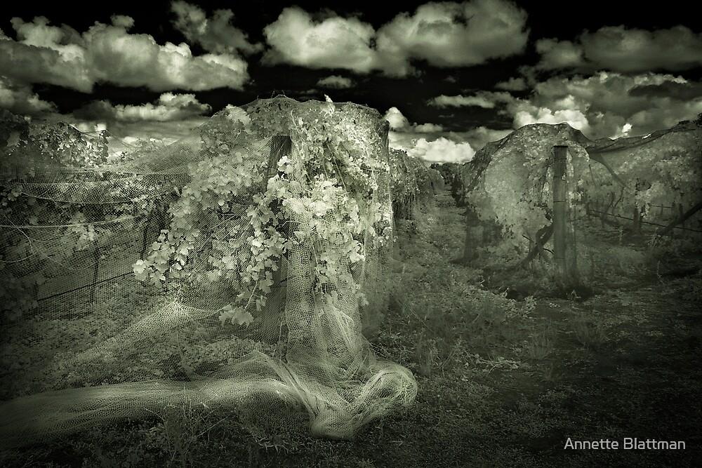 Veiled Vines by Annette Blattman