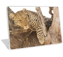 Cat Bird Seat Laptop Skin