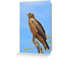 Yellow-billed Kite - African Raptors of Power Greeting Card