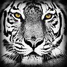 Tiger by fantasytripp