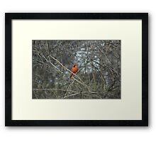 Have You Seen Her? Framed Print