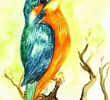 King Fisher Bird Watercolours by TintaDesign