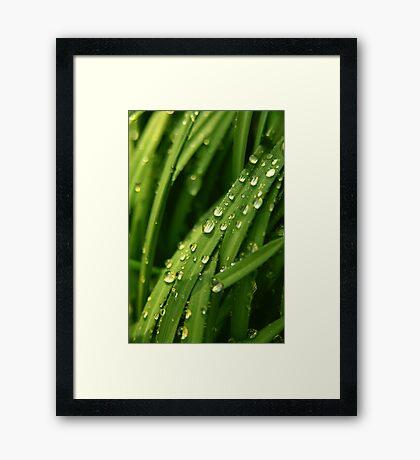 Green waterfall Framed Print